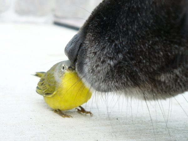 compatibilidad ninfas y perros