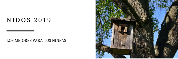 nidos para ninfas 2019