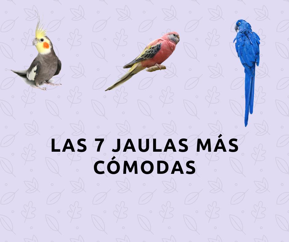 LAS 7 JAULAS MÁS COMODAS