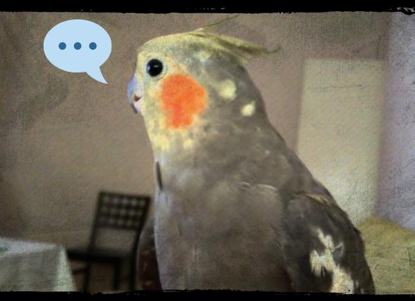 las ninfas hablan